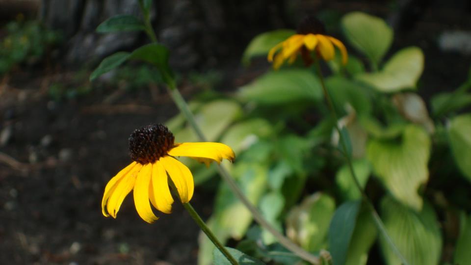 sept flowers 2.JPG