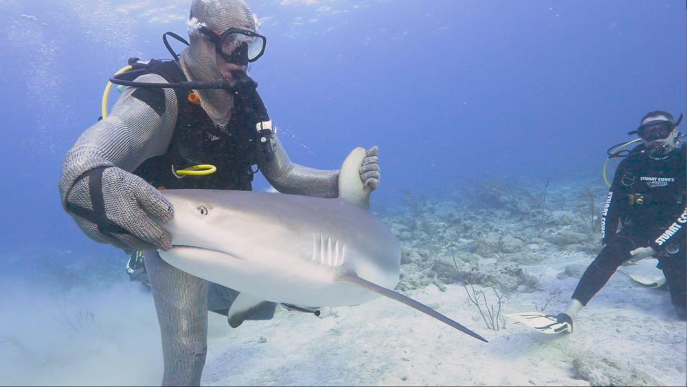 !EDITING_SharkPSA.PNG
