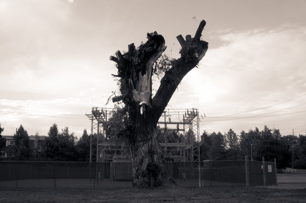 Tree Damaged by Lightning #3, Merlin Olsen Central Park, Logan, Utah, 2008