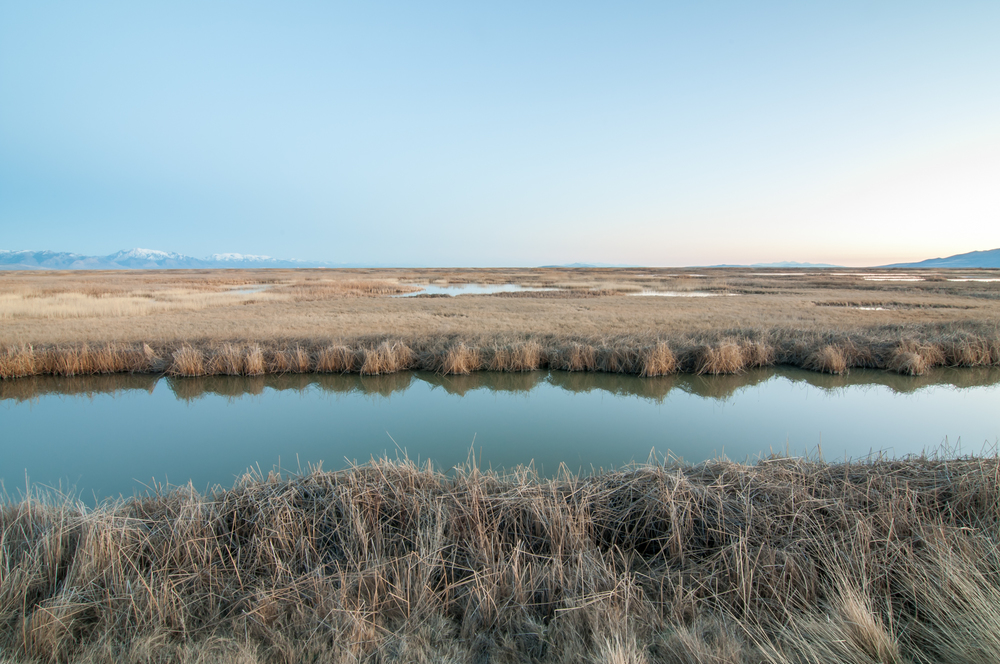 Bear River Migratory Bird Refuge, Utah, 2015