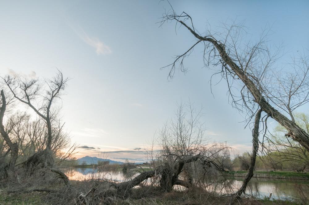 Cottowoods, Bear River, Benson, Utah, 2016