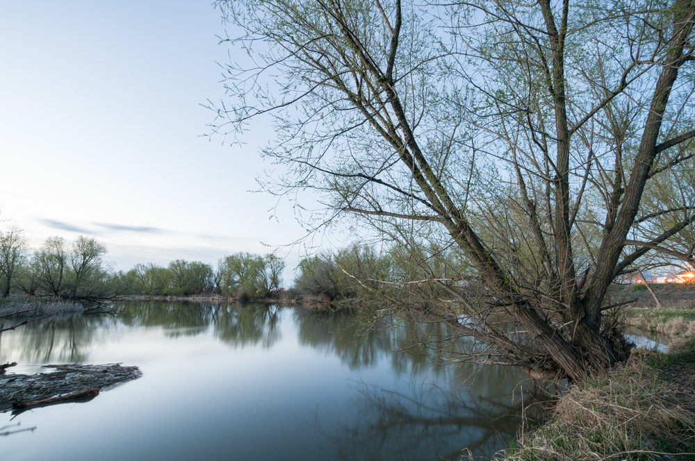 Cottonwood Trees on the Banks of Bear River, Benson, Utah, 2016
