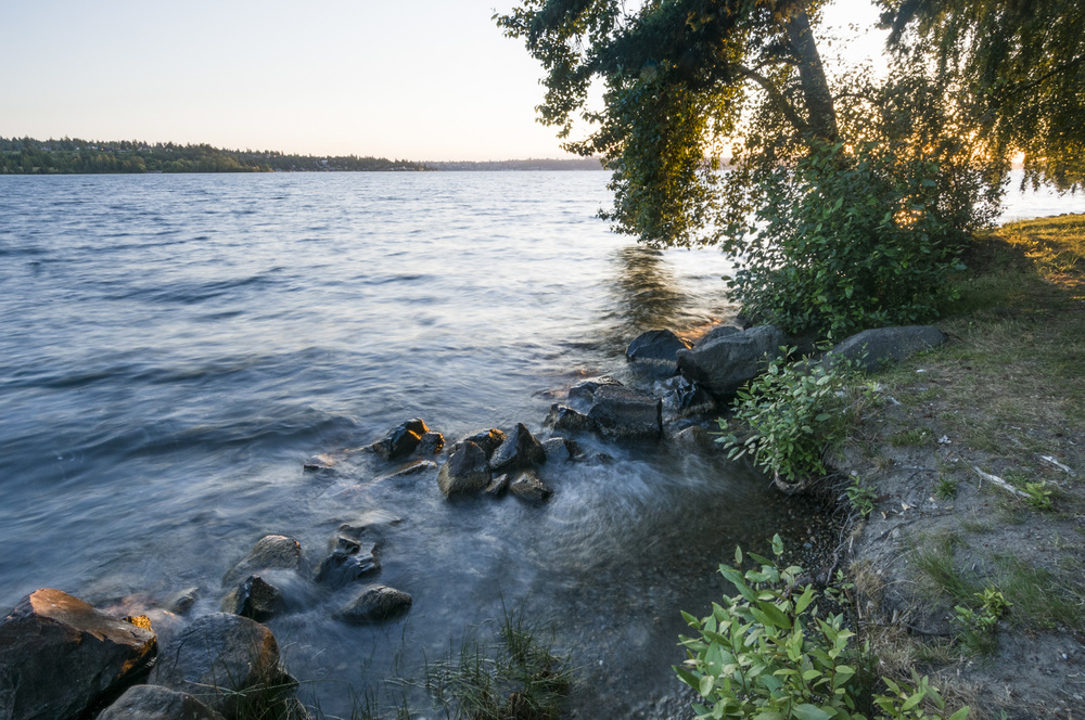 Lake Washington, Chism Park, Bellevue, Washington 2016