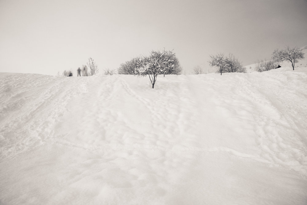Hyrum Gibbons Mount Logan Park, Logan, Utah 2017