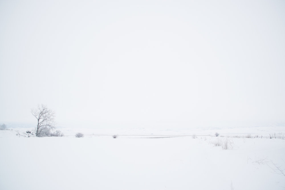 Snow Covered Field, Amalga, Utah 2017