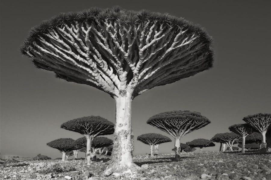 DIKSOM-FOREST-.jpg