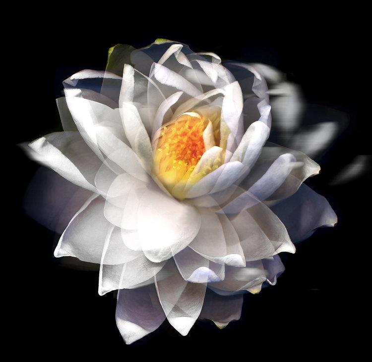 Lotus+-Fleck.jpg