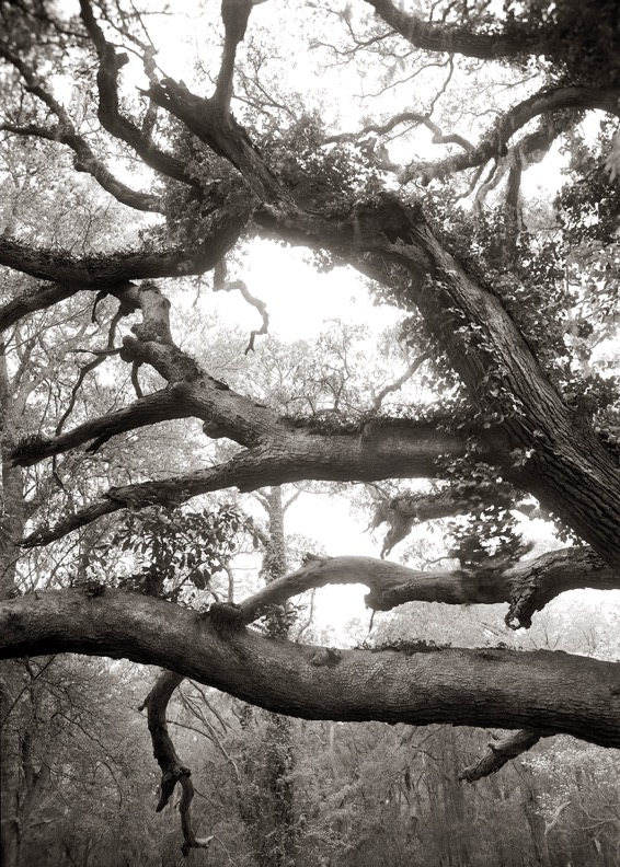 Limbs, over 100 years old