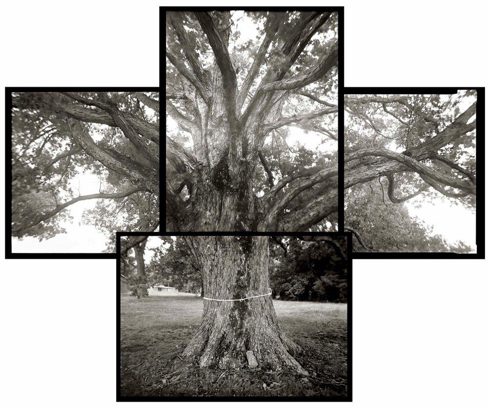Spared Tree