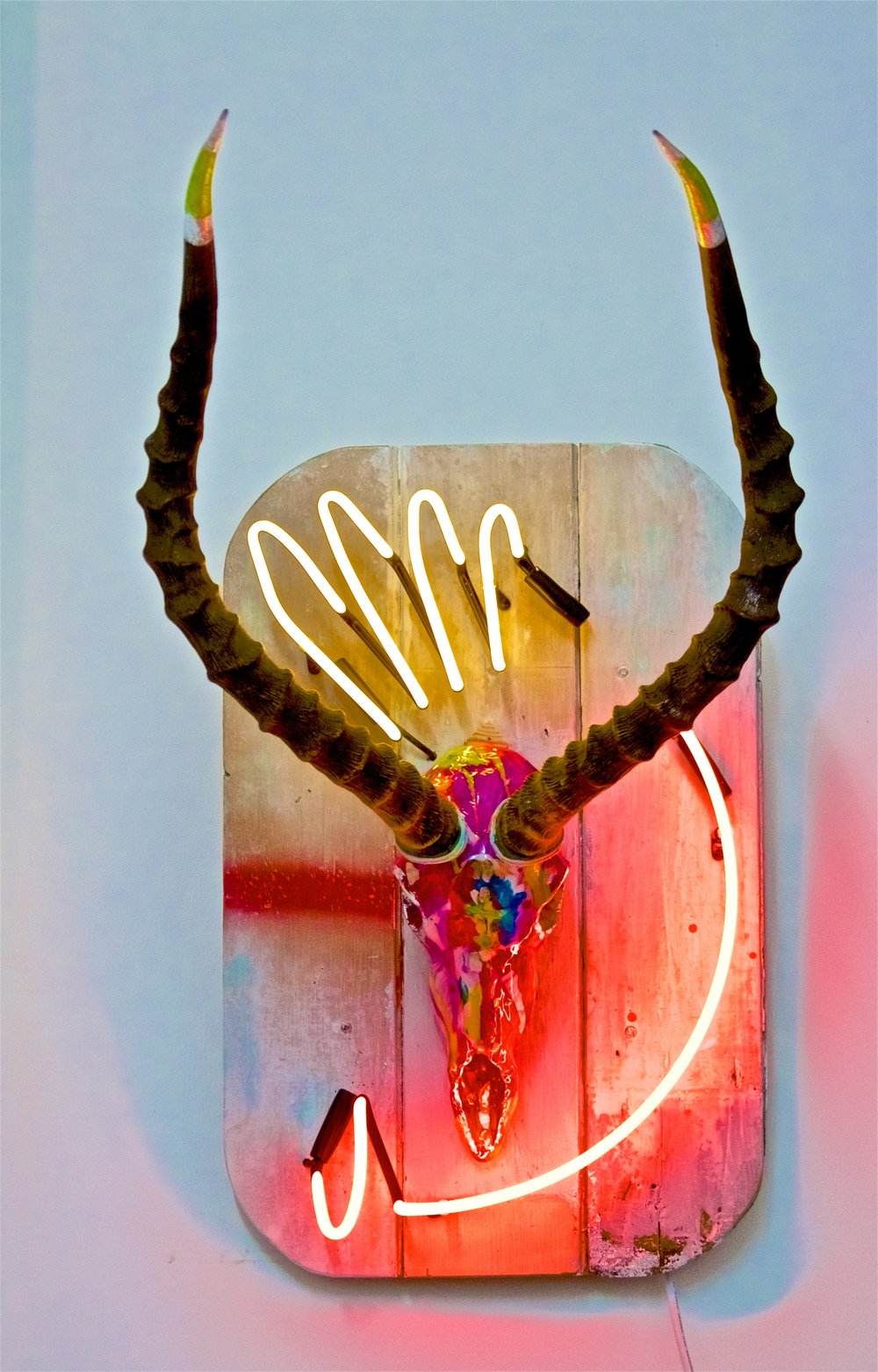 """AYO""  authentic antelope skull and horns, resin, acrylic and neon  65 x 43 cm 25 5/8 x 16 7/8 in"