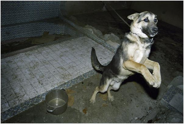 Tijuana Dog.