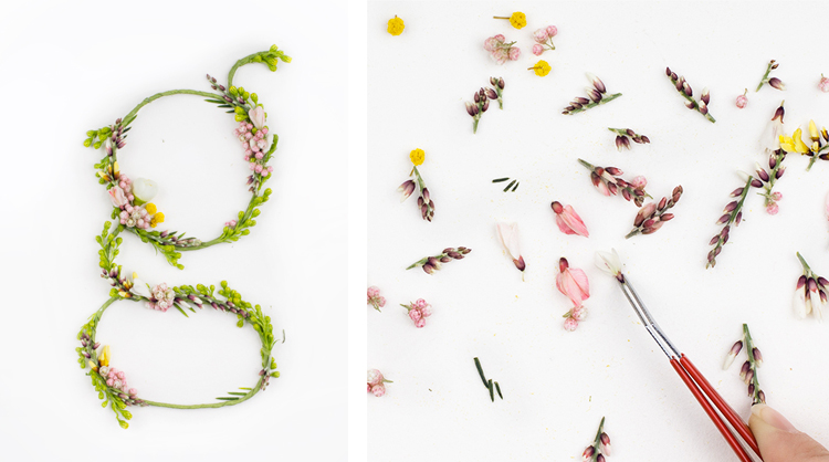 Loving Alice Mourou's   Blossom Type