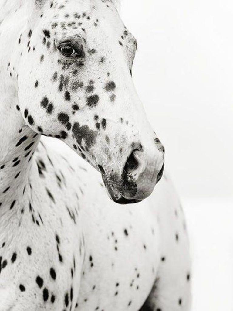 PATTERNITY_Leopard-Appaloosa_Stephanie-moon-1.jpg