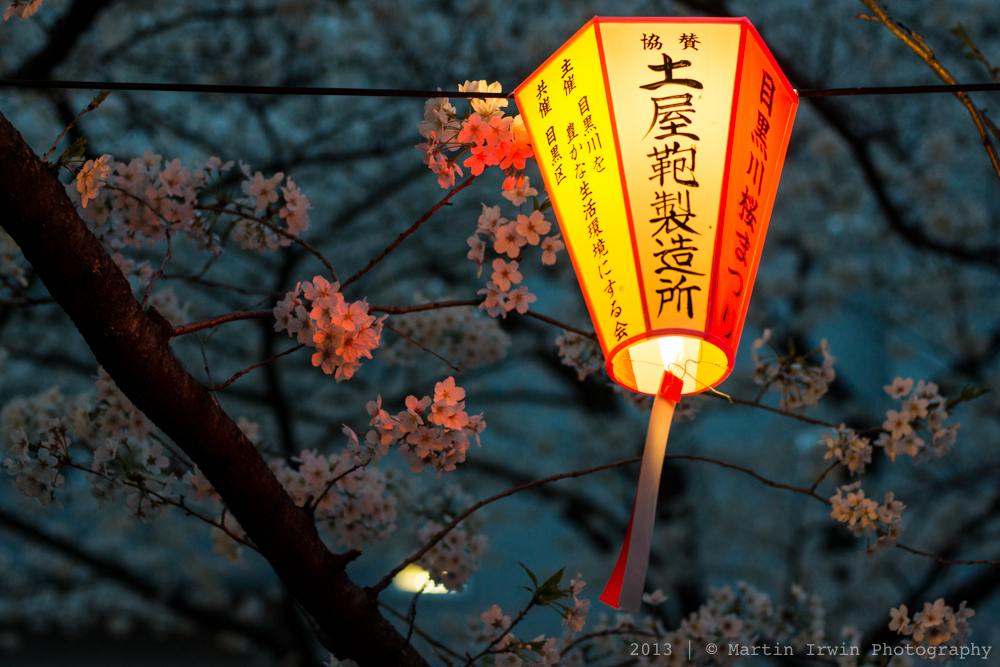 Sakura on the Meguro River