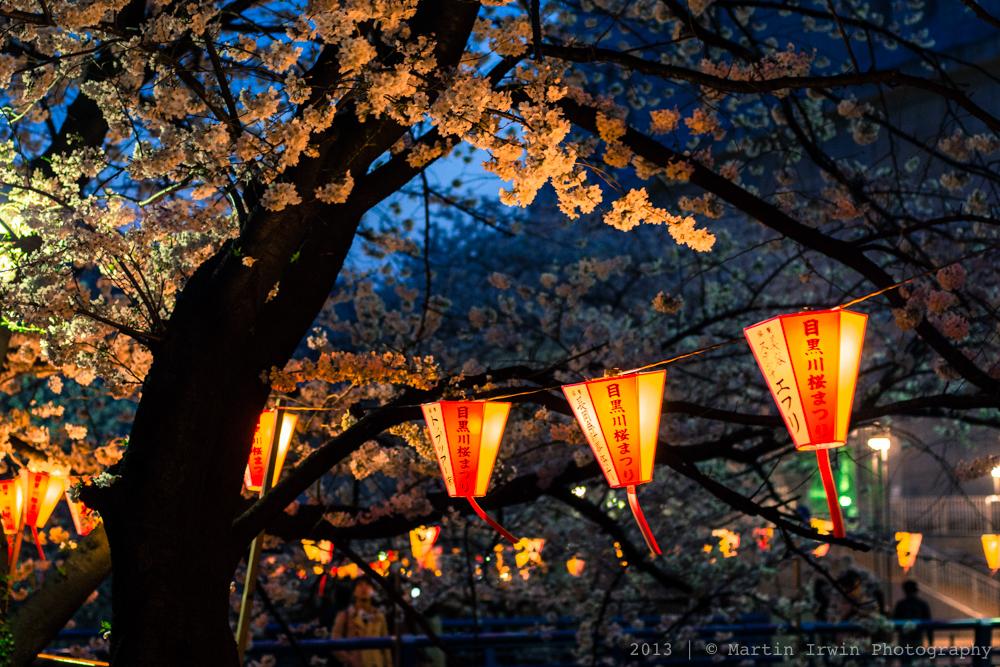 Sakura on the Meguro River│NEX-7 & Canon nFD 50mm F1.4 │ 50mm, ISO 1600, f/2, 1/40, RAW