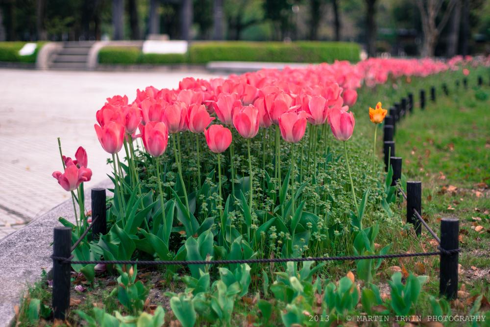 Tulip Road