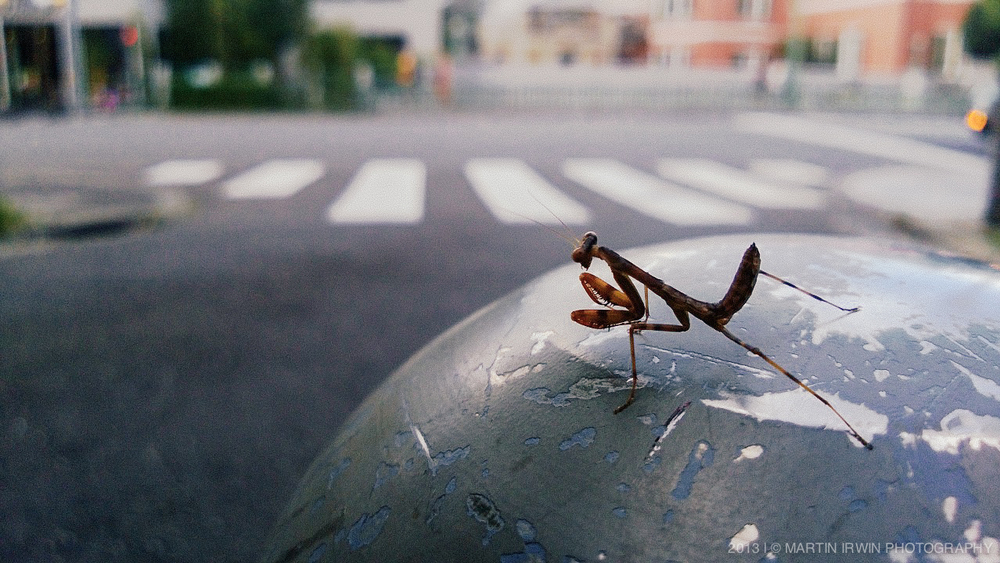 Mantis | Nokia Lumia 920 | 26mm [35mm Equivalent] 1/100s f/2.0 ISO100 | Edited in Lightroom 5