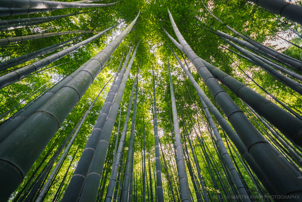 Bamboo Forest | NEX-7 & SEL16F28 & UWA | 1/100s f/2.8 ISO200 16mm