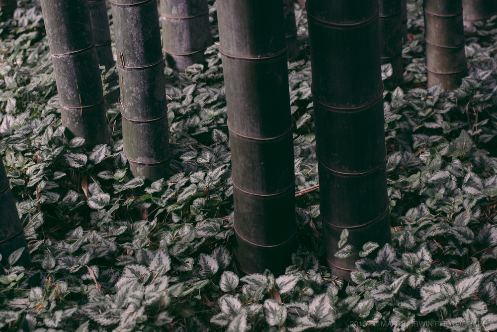 There's something distinctly Asian about a bamboo forest