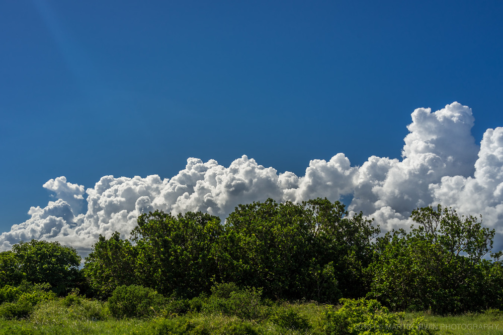 Clouds mimicking bushes...