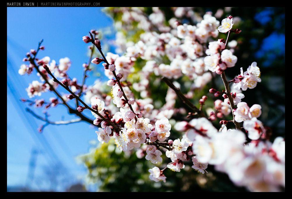 20140308-_DSC2810.jpg