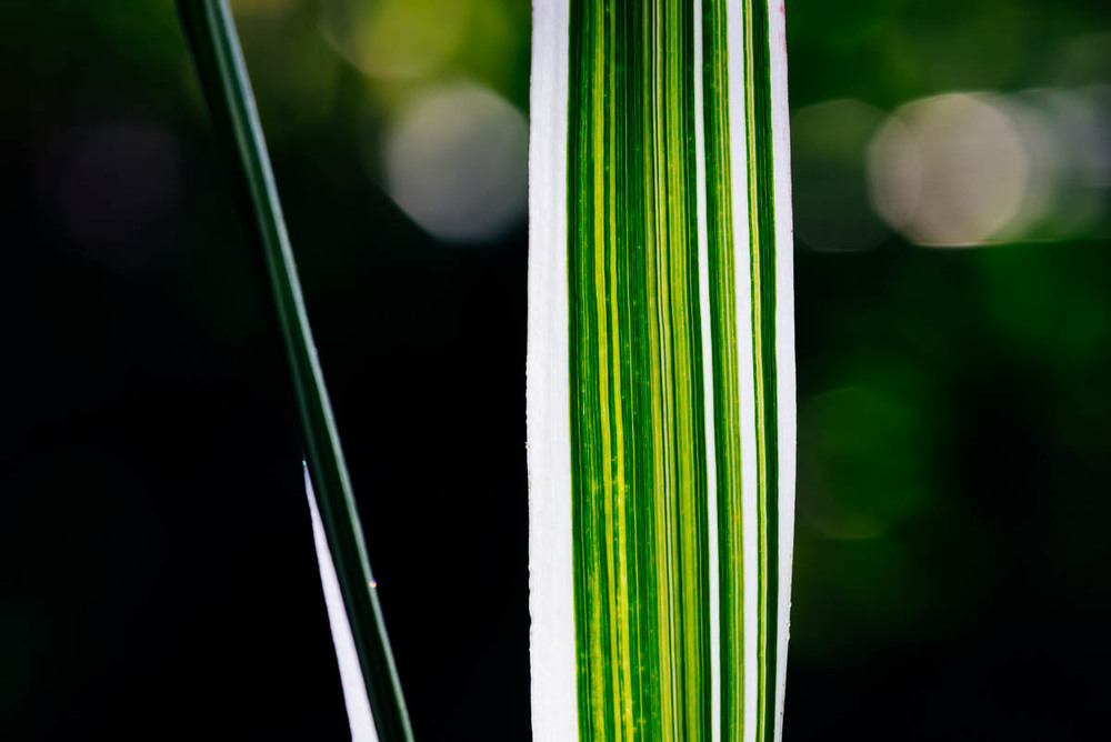 Grass | 1/125s ISO160 90mm