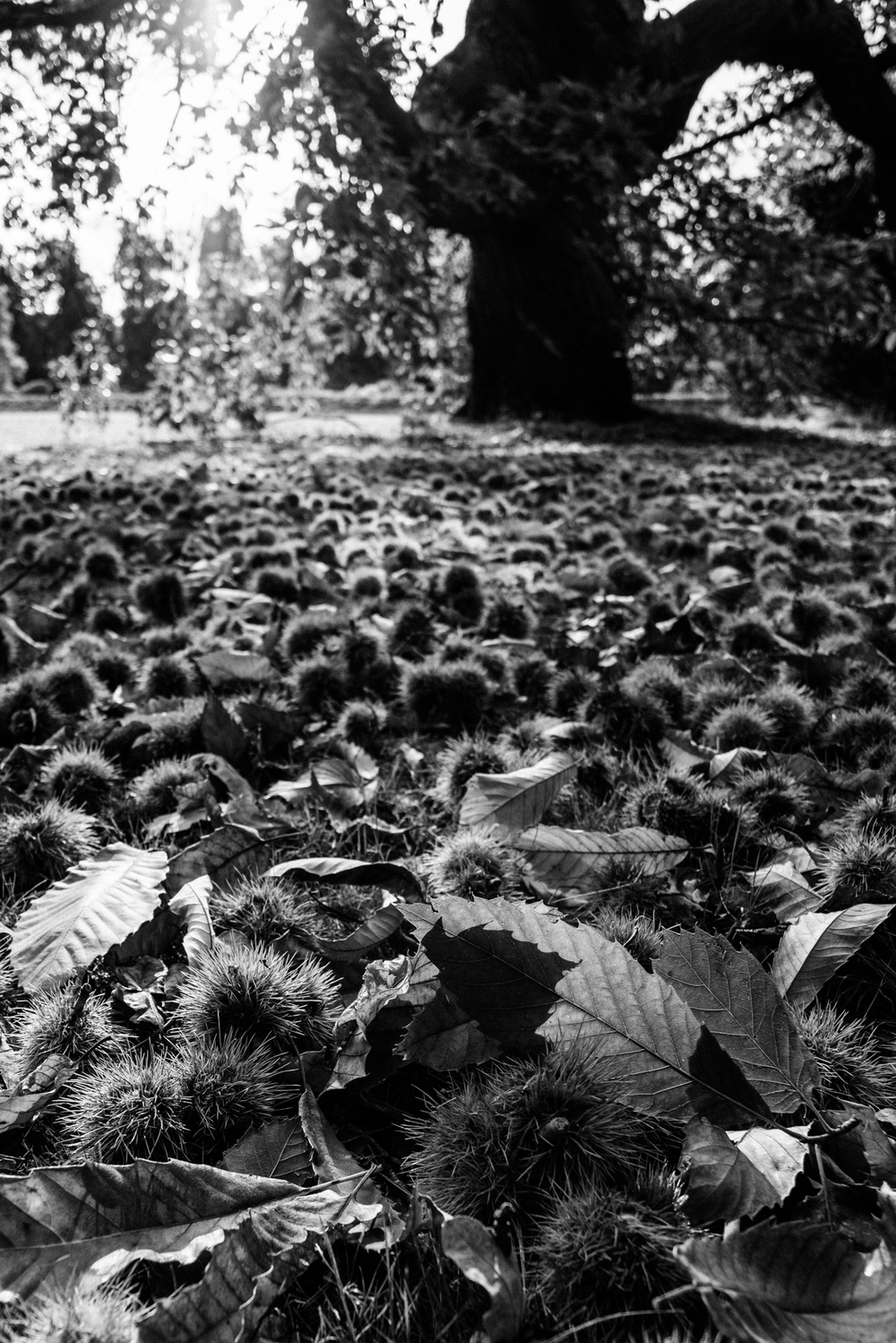 Conkers | A'R & Voigtländer 20mm f3.5 | 1/500s f/6.3 ISO500 20mm