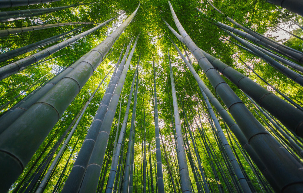 Bamboo+Forest.jpg