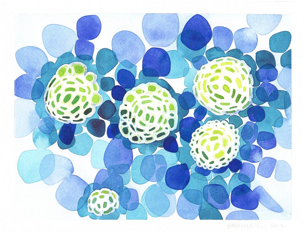 Coccolithophores V