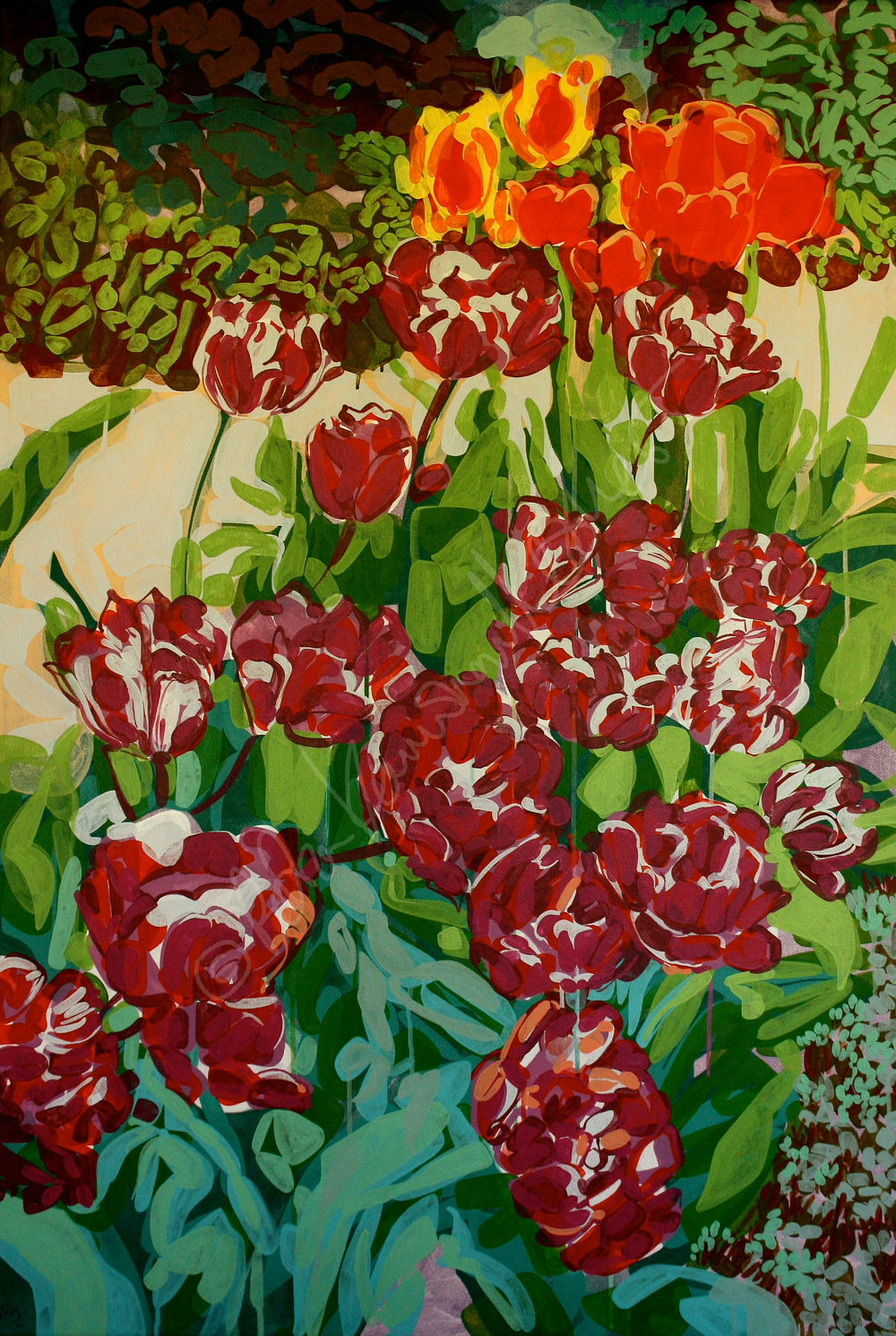 Tulipa Rosea