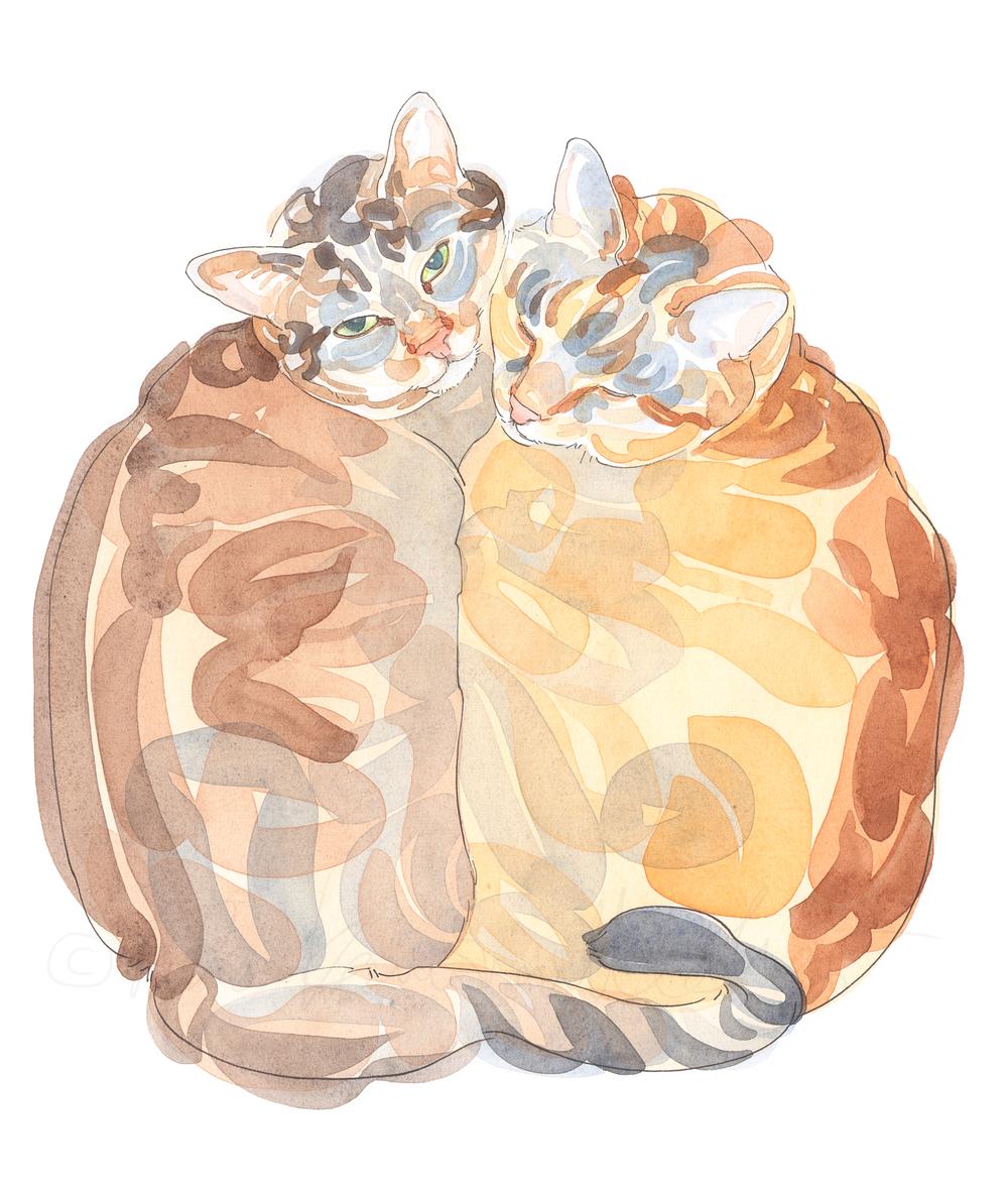 Kissa-aivoitus