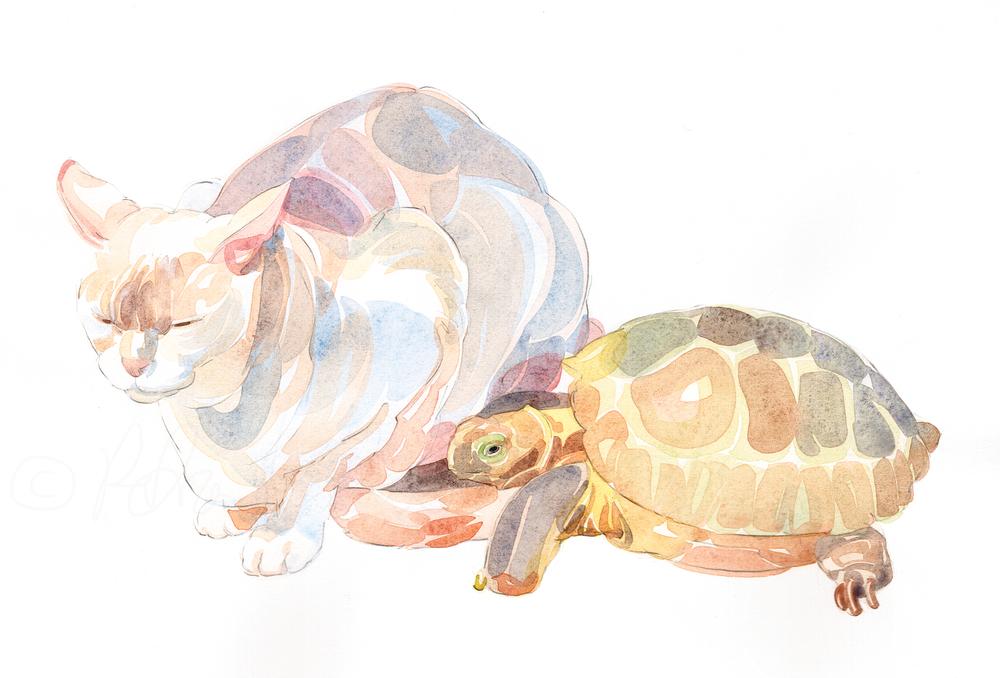 Burmese and Tortoise