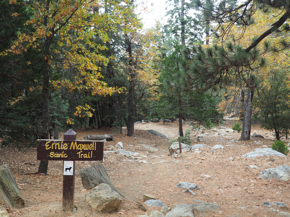 Idyllwild's hiking trails would have to wait. Photo credit: Jeff Toister