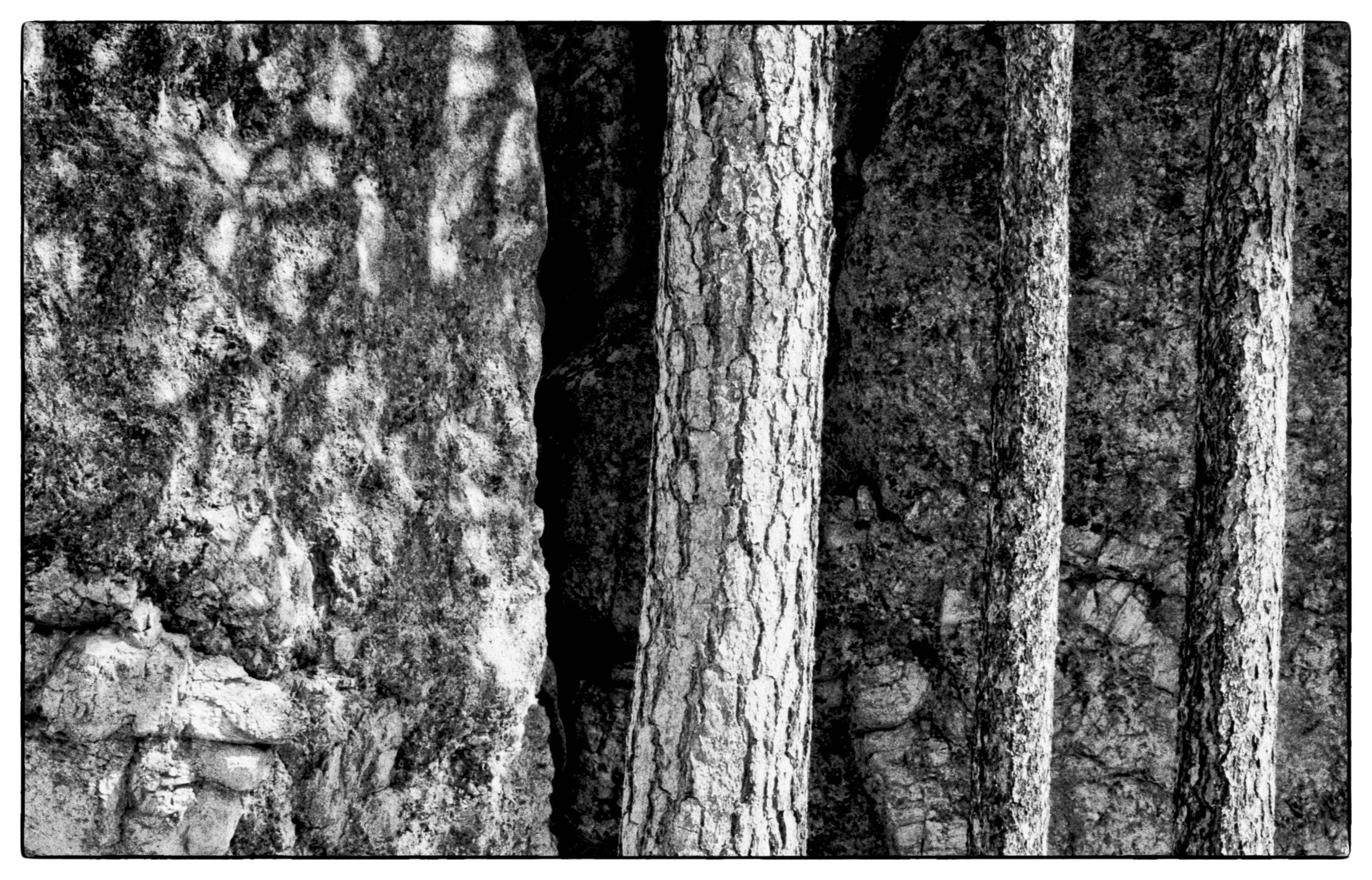 Trees near Mr. Rushmore