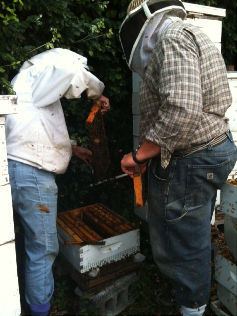 "Don and Carolyn inspect the hive, looking for brood and making sure it is deemed ""queenright,"" meaning that the queen is alive and laying eggs."