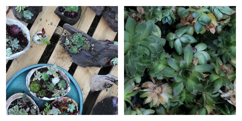 succulent collage.jpg