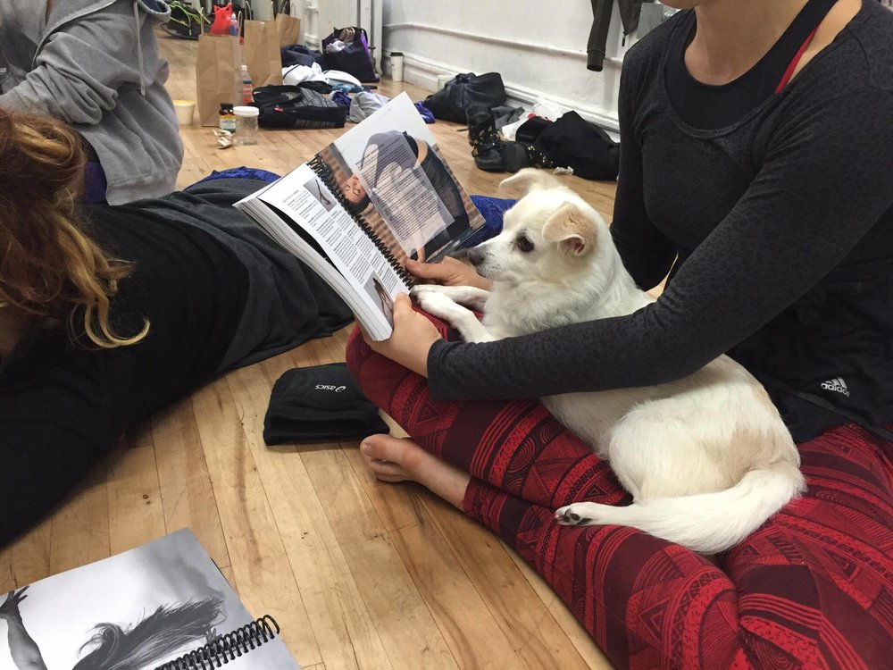 Emily's assistant, Sparky, focusing on the Floor Flow® Teacher Training manual!