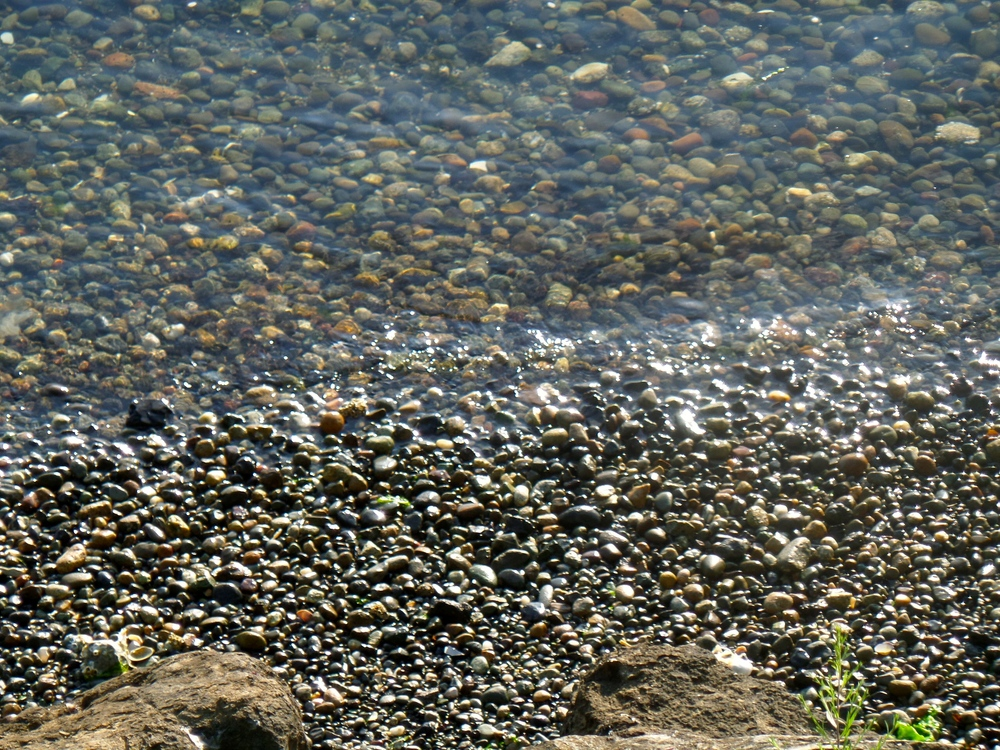 These pebbles feel the earth's movement every moment by being totally above or totally below water. Tides are continually shifting in Puget Sound.