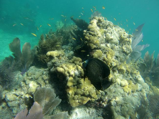 BuDhaGirl, Bahamas, Exumas, Snorkeling