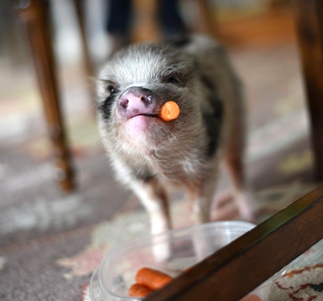 petal eating carrots