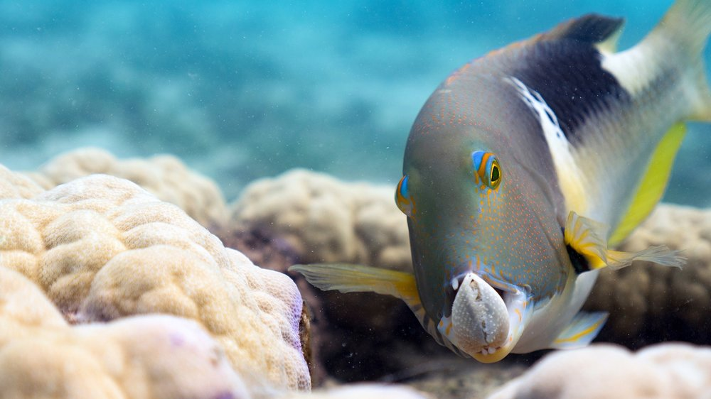 Stunning footage of Earth's oceans and marine life continue to amaze and enhance our knowledge in HD