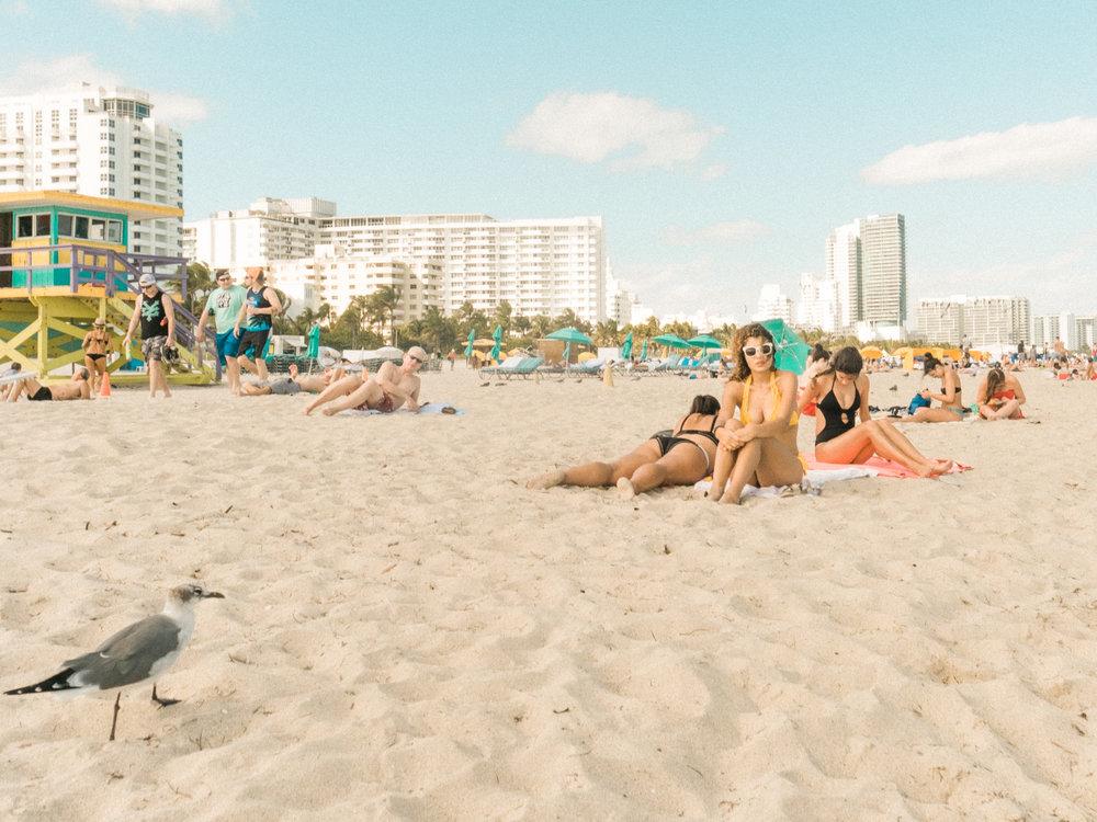 Miami_Beach_Street_82.jpg