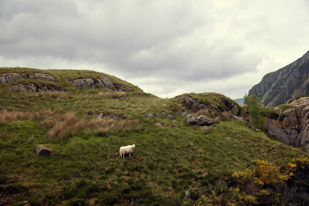 Portraits and Landscapes in Snowdonia Wales