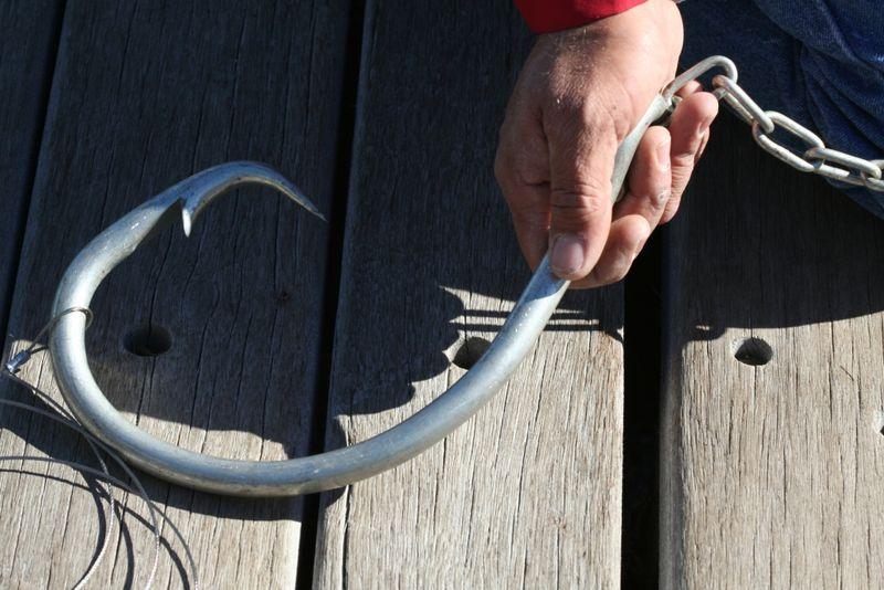 shark hook.jpg