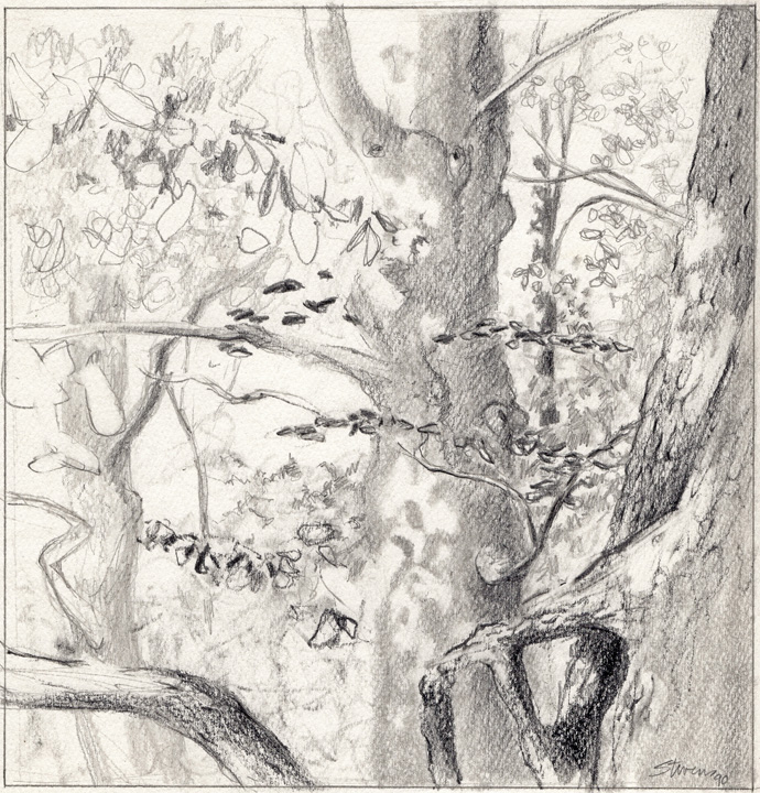 1990 sketch by Rick Stevens     website