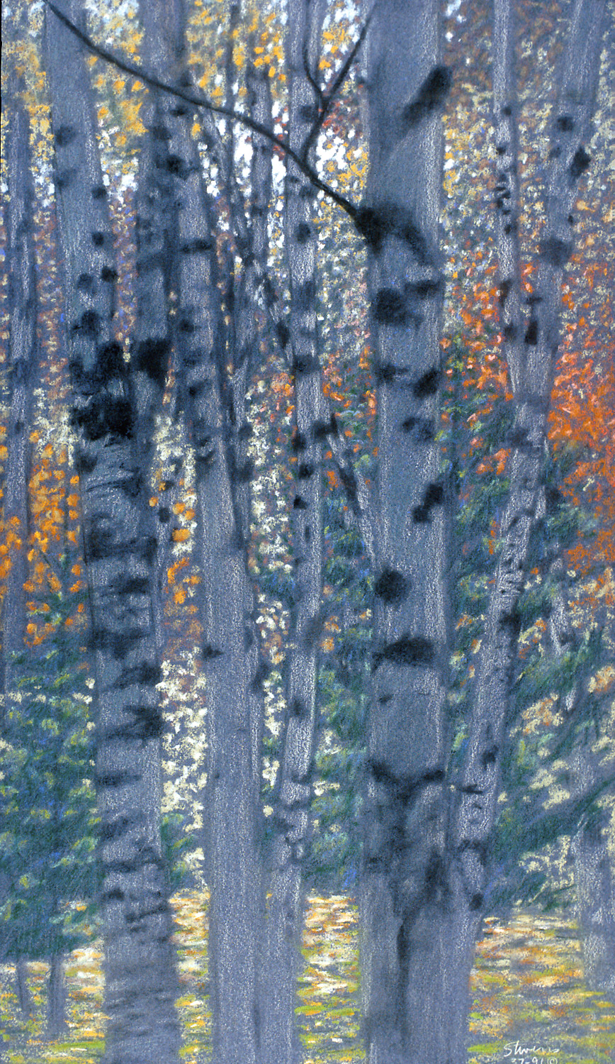 Birch Forest   | pastel on paper | 19 x 11"