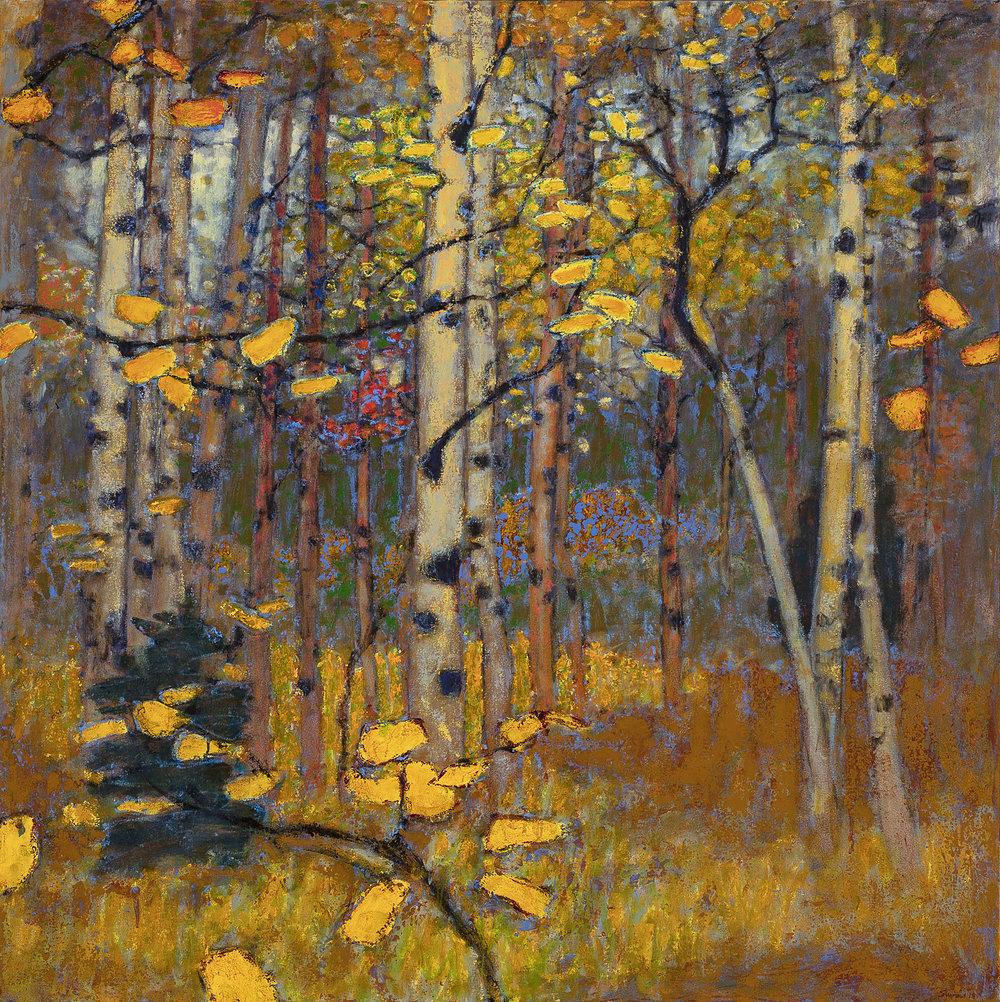 "Aspen Grove in Fall   oil on canvas   48 x 48"""
