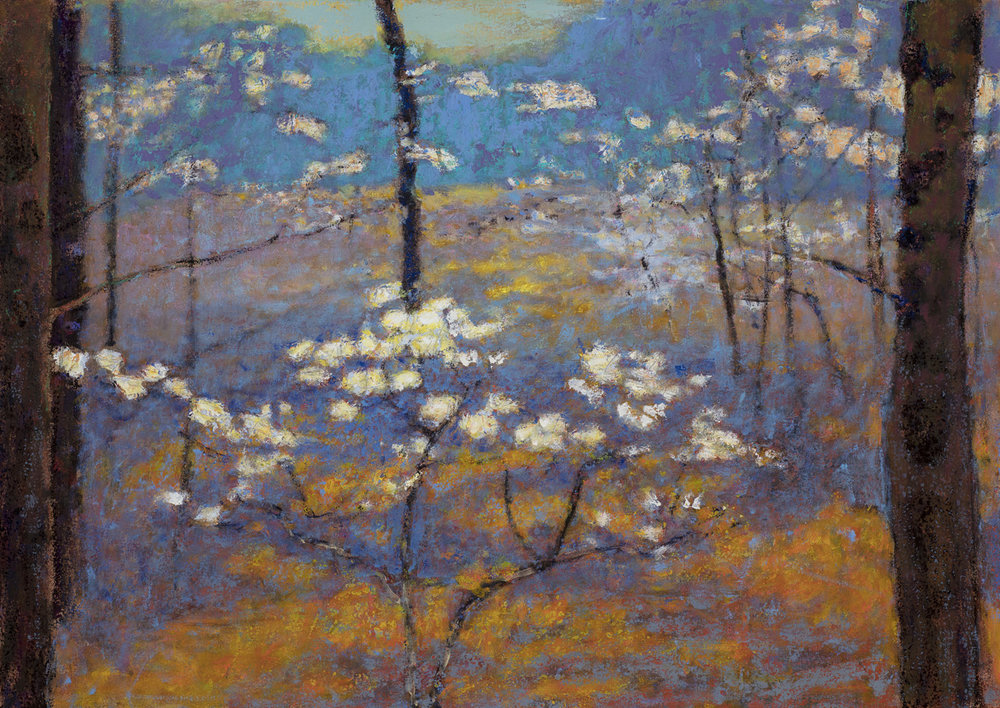 Dogwood Blossoms | oil on canvas | 32 x 45""