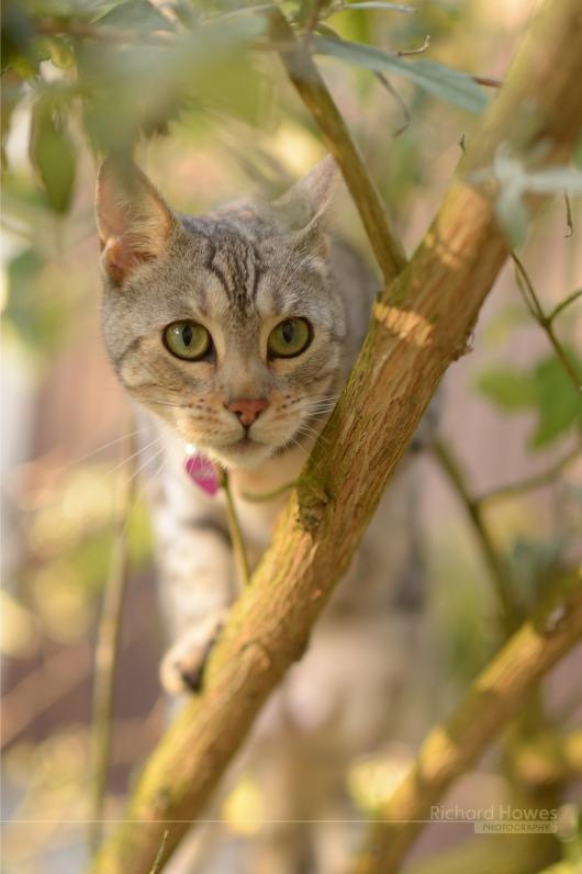 Pet cat.jpg