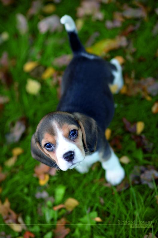 Pet dog 3.jpg